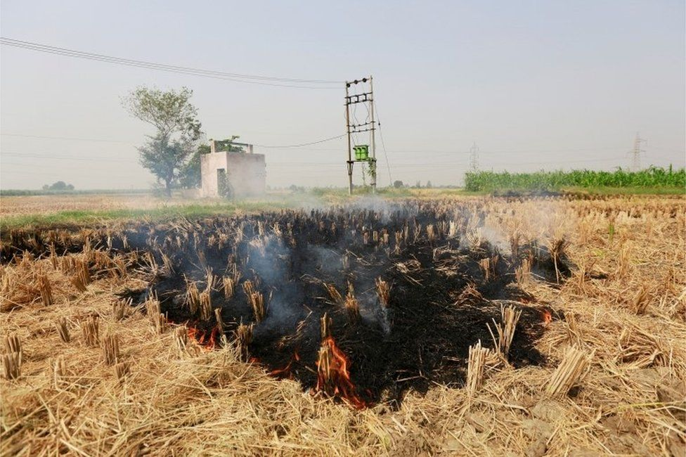 Stubble is seen burning at a rice field in Gharaunda in the northern state of Haryana, India, October 9, 2018