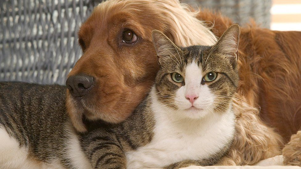 A cat and a dog sharing a cuddle