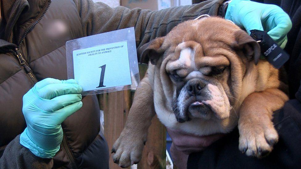 Dog in court case