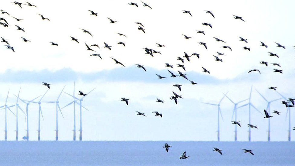 birds flying towards wind turbines