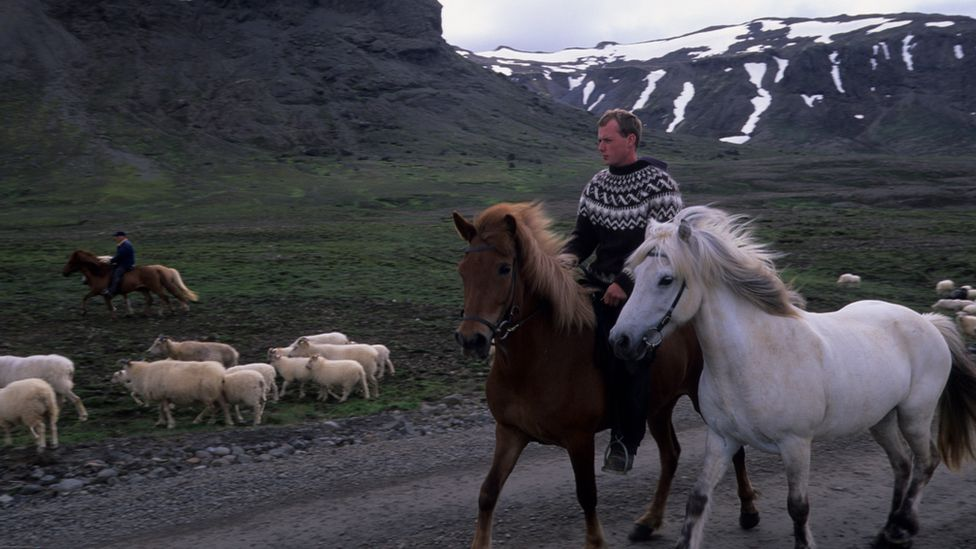 Icelandic sheep farmers 2002