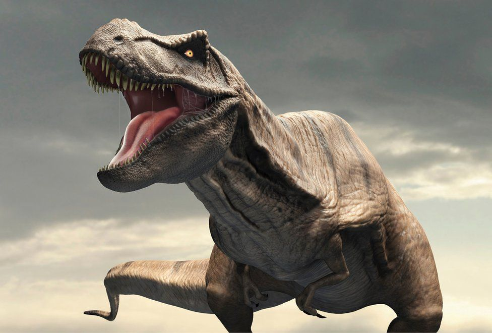 Tyrannosaurus rex had 'air-con' in its head