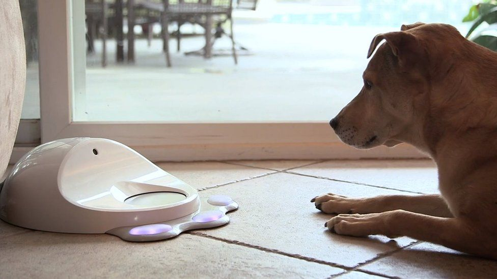A dog looks at the Cleverpet device
