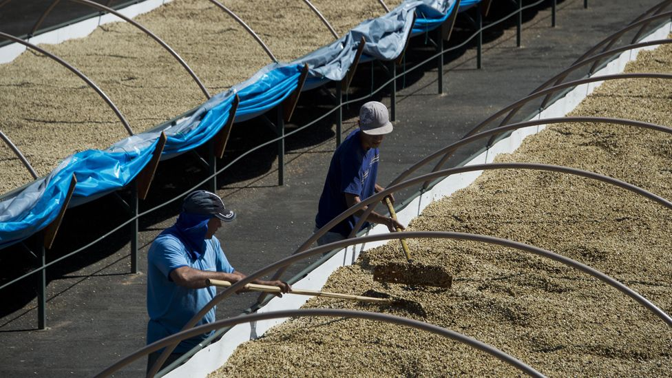 Workers drying coffee beans at a farm in Sao Paulo state