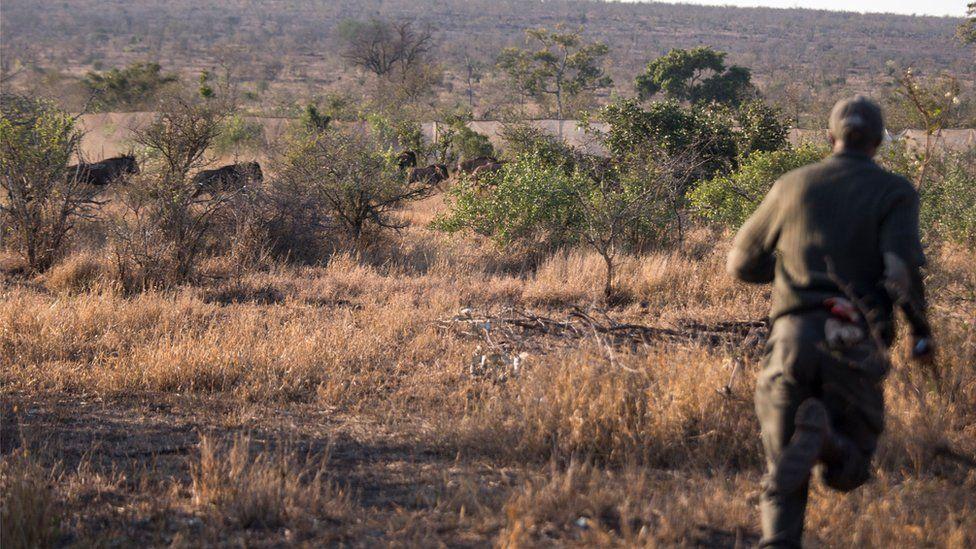 Ranger at Kruger National Park