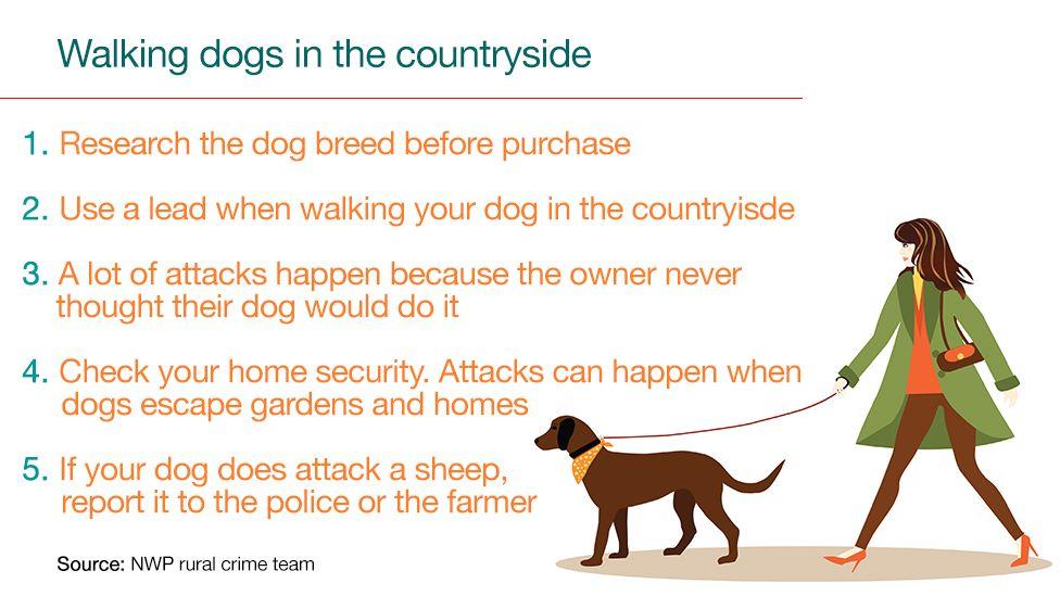 Walking dogs guide