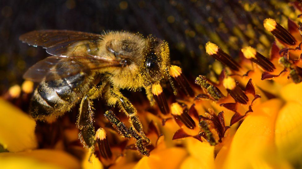 Why 500 million bees have died in Brazil in three months