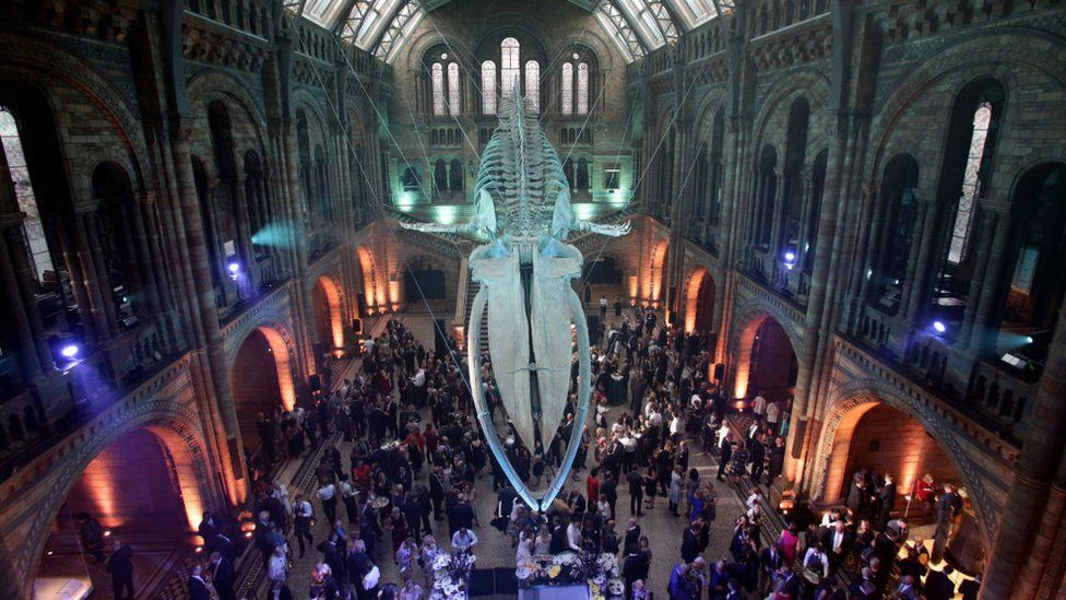 Guests mingle below a blue whale skeleton named Hope