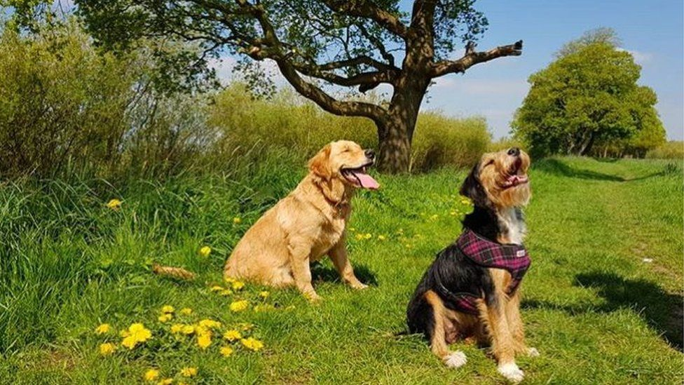 Dogs Red and Ginny soaking up the sun in Airmyn near Goole, East Yorkshire