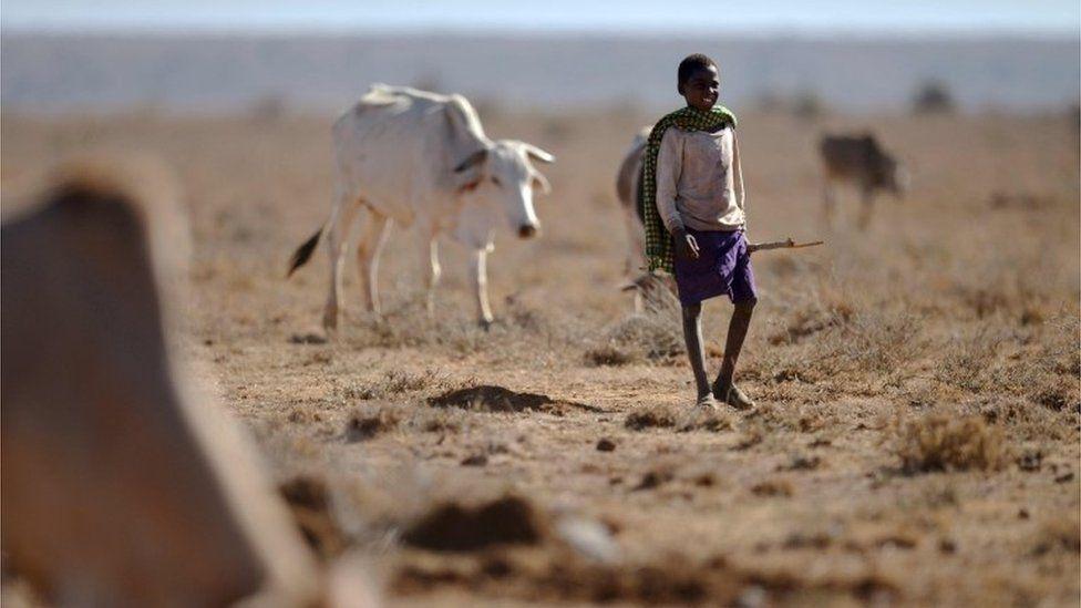 Samburu herdsman
