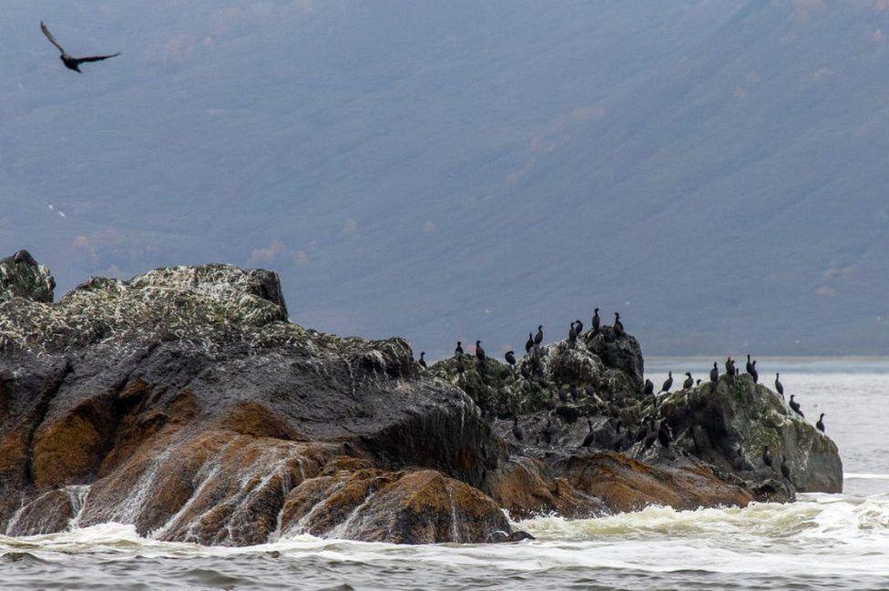 Cormorants on rocks in Avacha Bay, 5 Oct 20