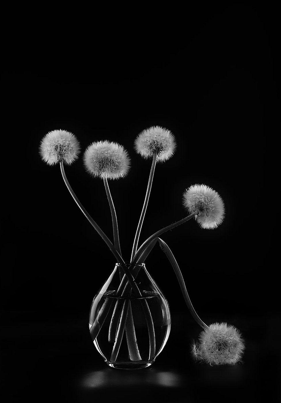 Dandelions in a glass vase