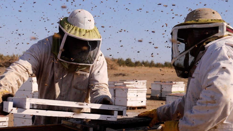 Californian beekeeper