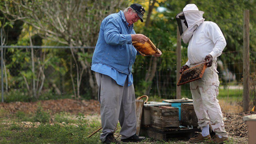 Beekeepers in Florida