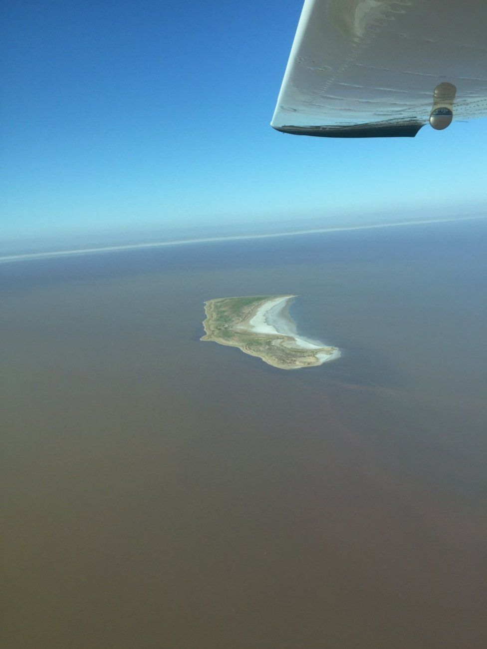 An island covered in vegetation is seen in Lake Eyre