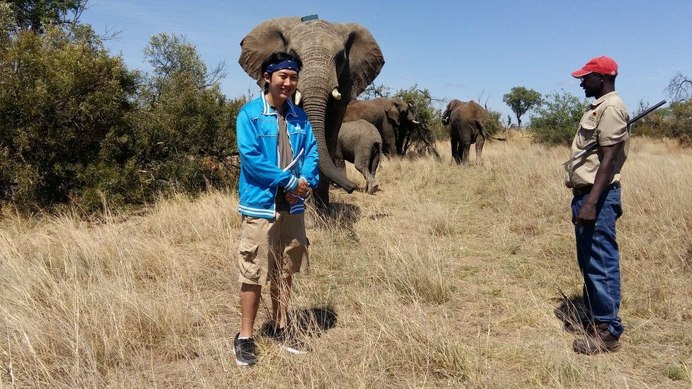 Researcher Alistair Yan from the University of Pretoria in South Africa with a tagged elephant