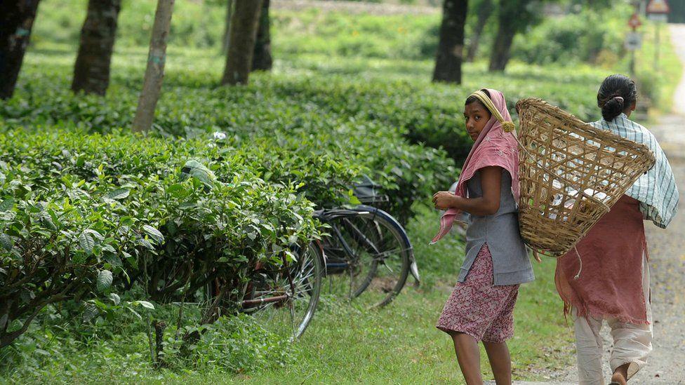 Women tea workers in India