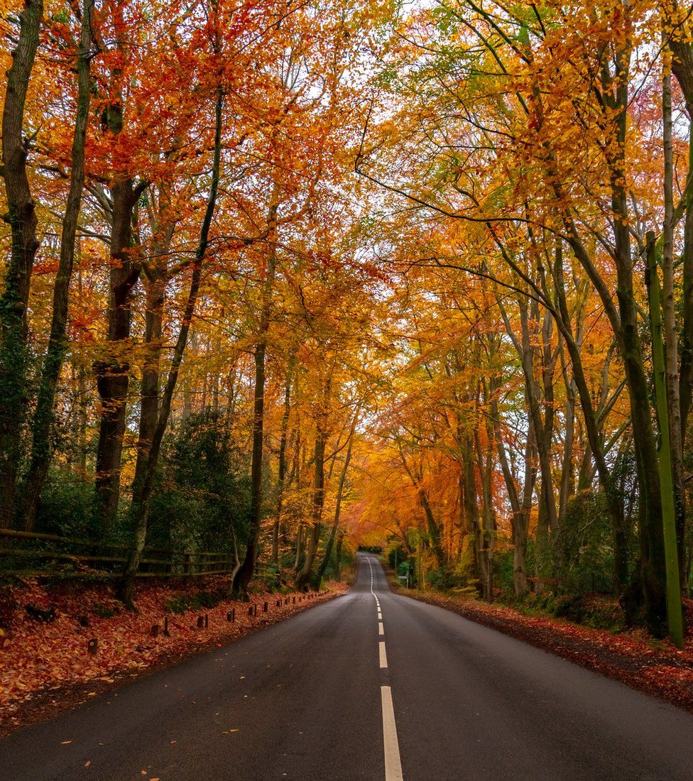 Autumnal trees lining a road