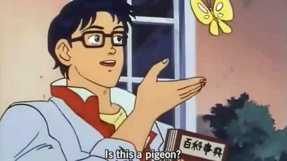 This is the meme. A man gestures towards a butterfly and asks, is this a pigeon?