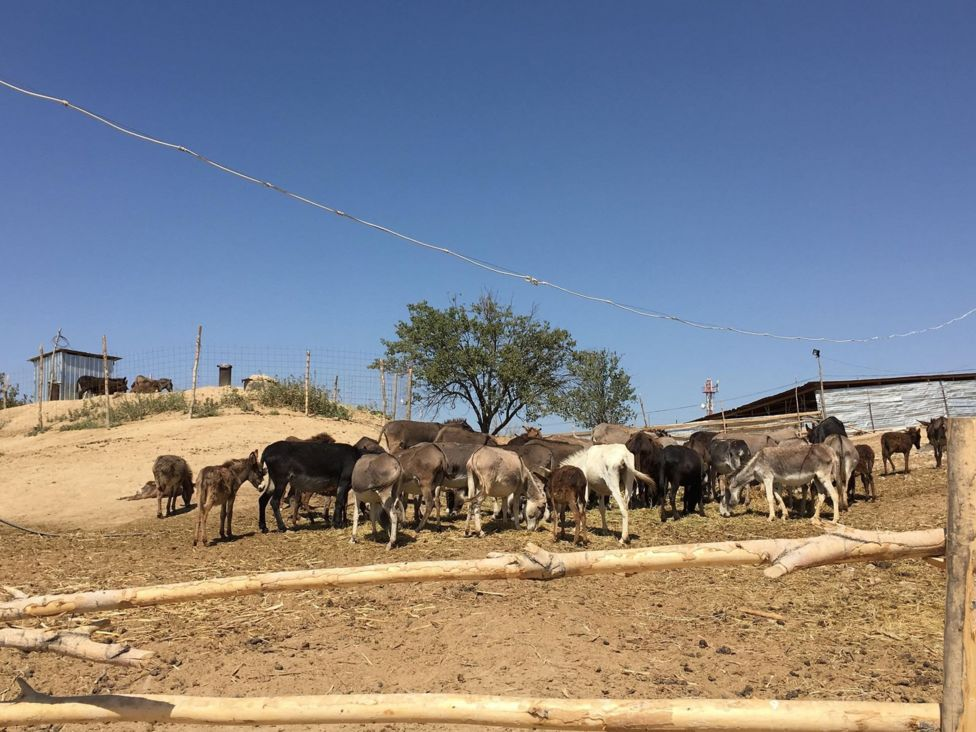 Калкынын дээрлик 70 пайызы айылда жашаган Кыргызстанда эшекти көлүк катары айыл чарба жумуштарында кеңири колдонушат.