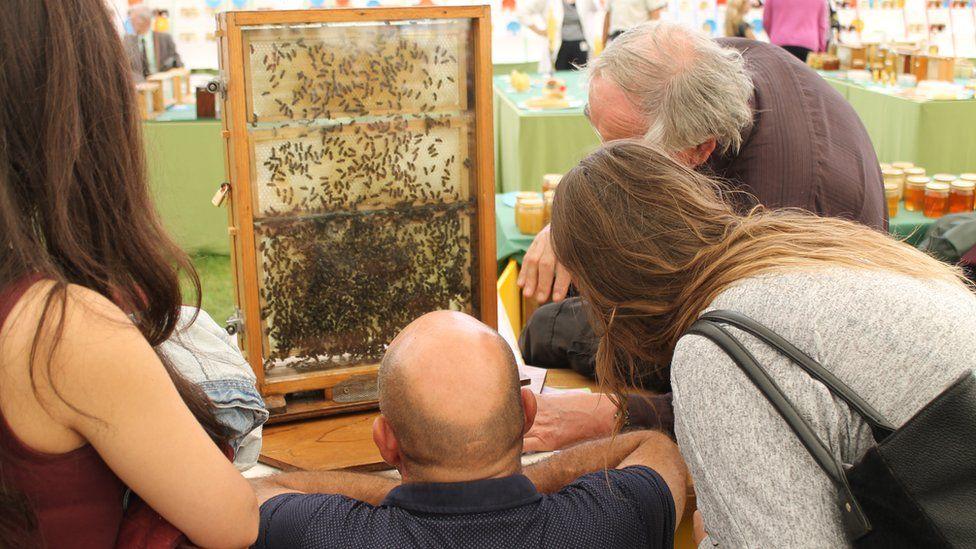 Mae'r byd yn fêl i gyd // Bees-y watching the honey production