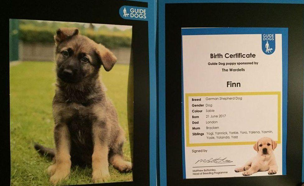 Guide dog puppy Finn