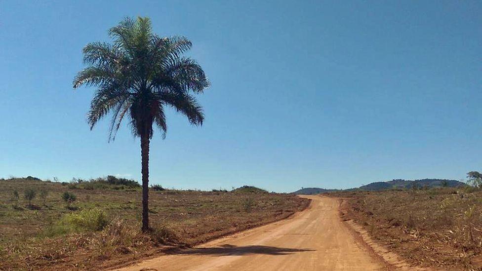 Palm tree by side of dusty road