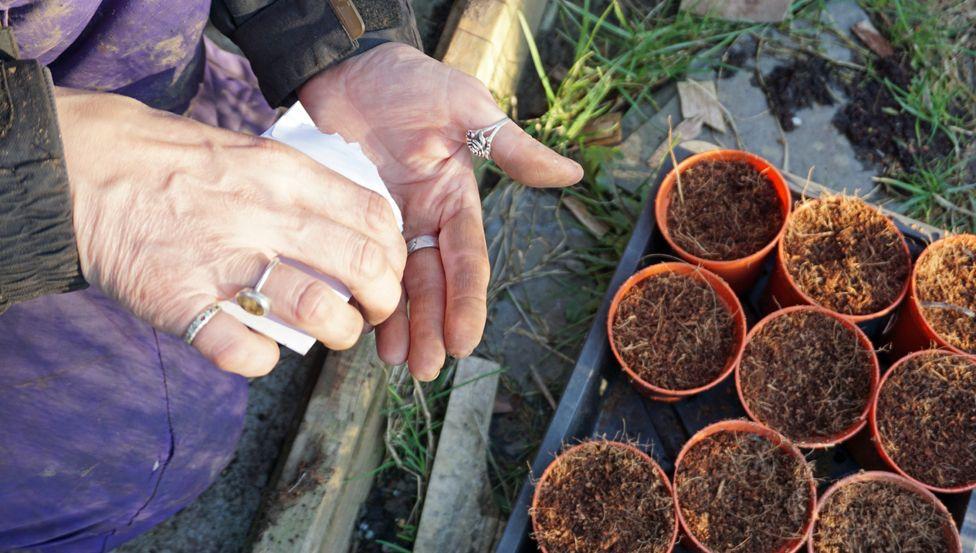 Rachel planting seeds