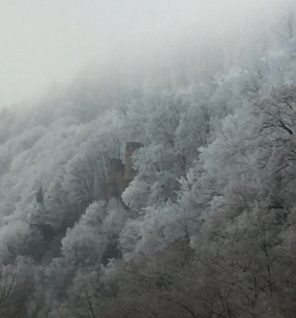 A frosty forest
