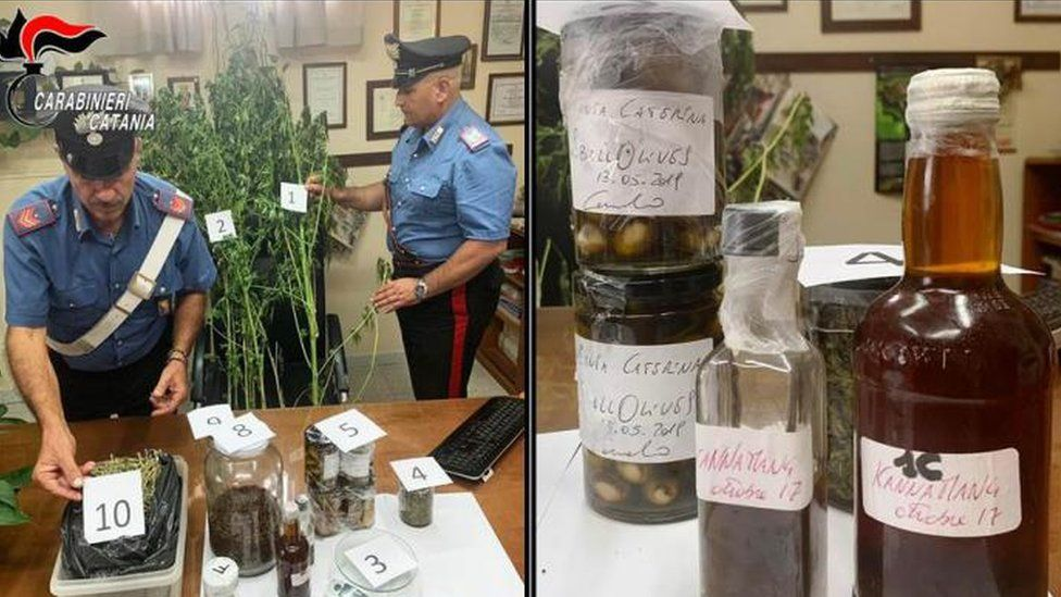Police found two large cannabis plants and Indian hemp at Carmelo Chiaramonte's home