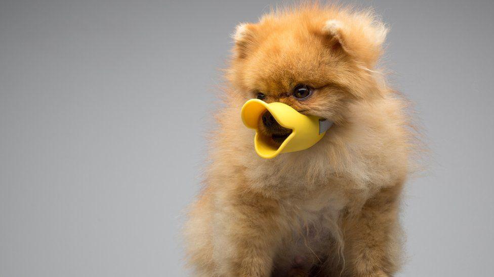 A dog dressed as a bird