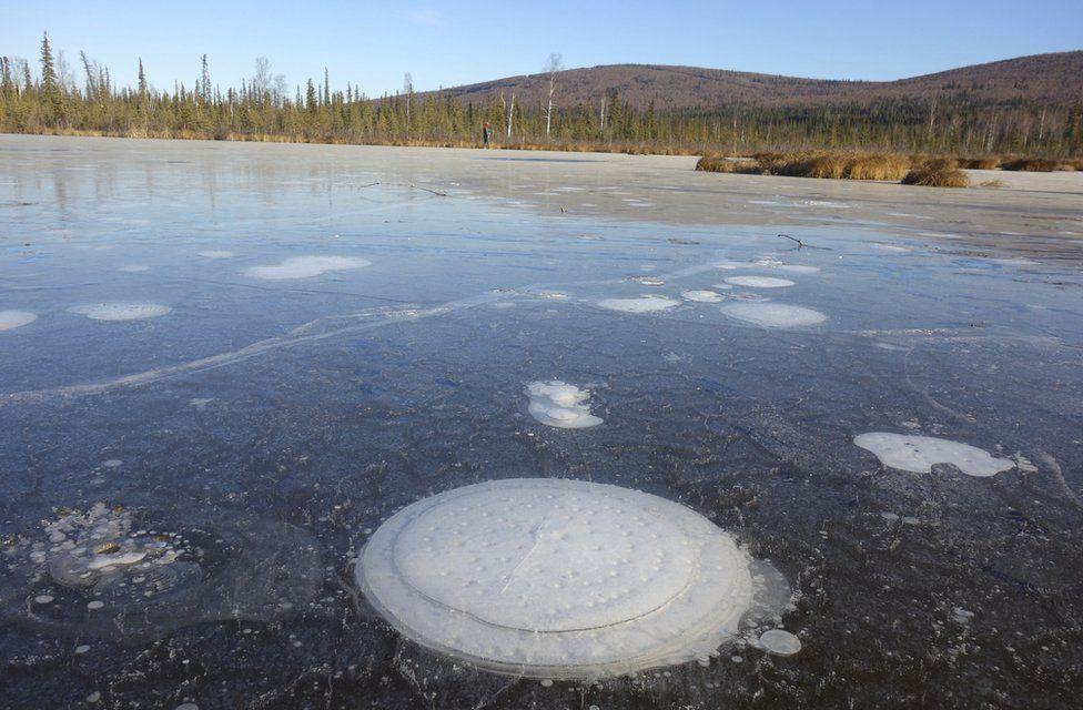 Methane gas bubbles trapped in a frozen Alaskan lake