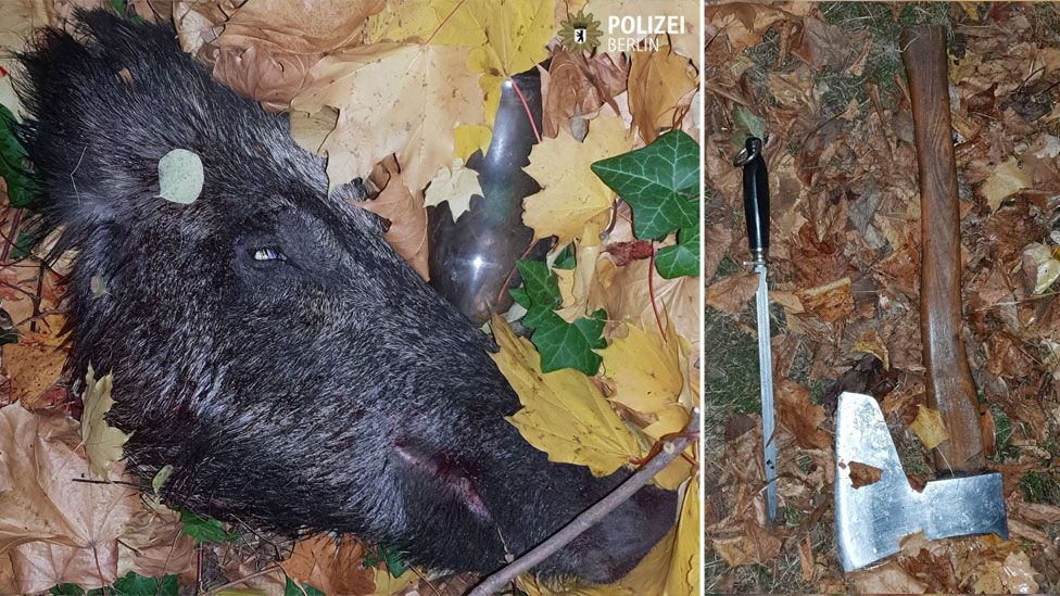 A composite image shows the decapitated head of a boar, left, with an axe and sharpening steel, right