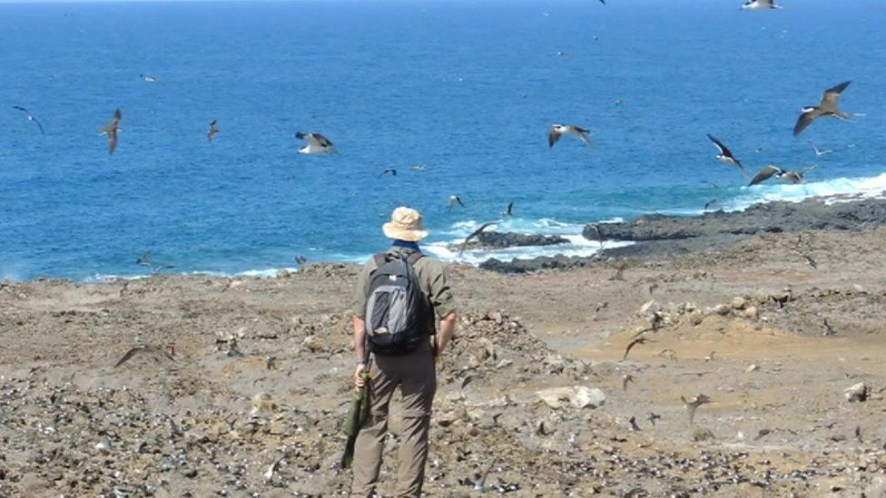 Ascension Island and birds