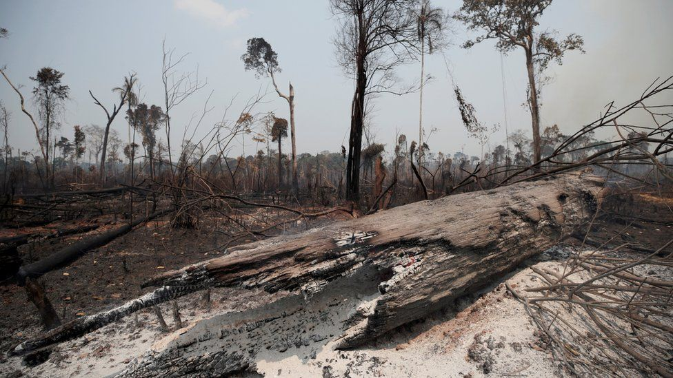 Charred trunks are seen on a tract of Amazon jungle, that was recently burned by loggers and farmers, in Porto Velho, Brazil, on 23 August 2019