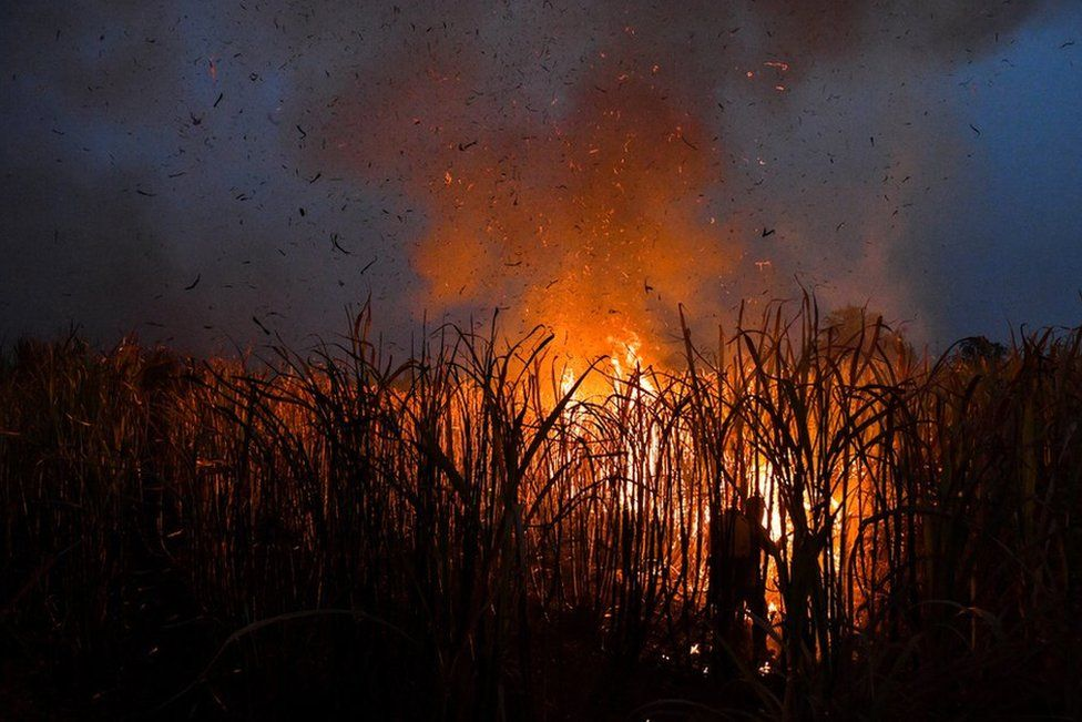 Farmer burns a sugar cane field at night as local growers try to avoid arrest by authorities who banned on the practice to curb smog in Suphan Buri province