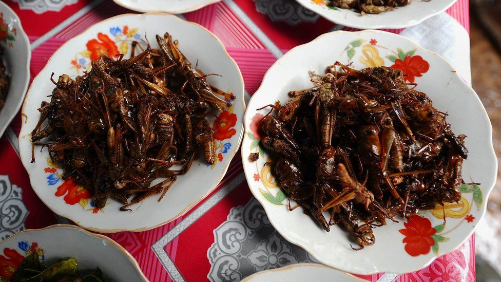 Insects on a plate