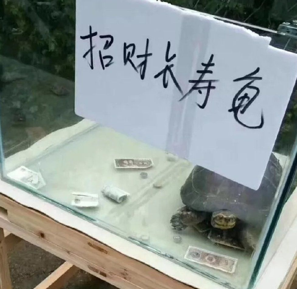 A tortoise in a small tank and a sprinkling of money