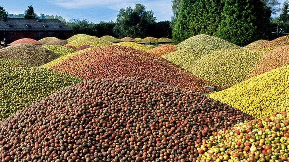Piles of cider apples
