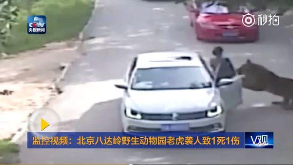 Still from CCTV footage showing tiger attack