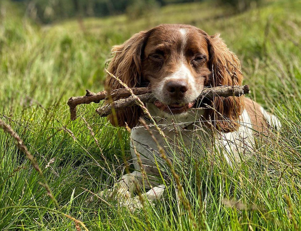 Max looking dozing with sticks in his mouth
