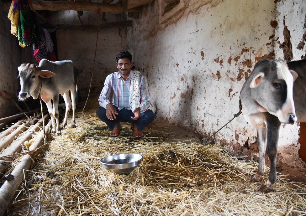 The village headman sits in a shed with two cows.
