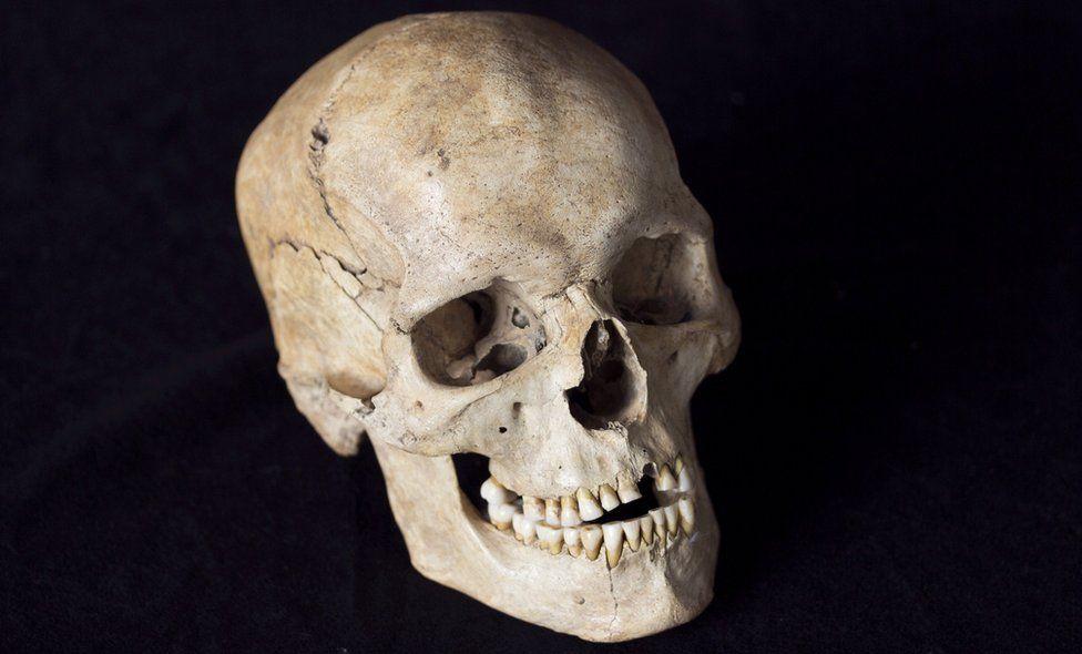 Villabruna skull