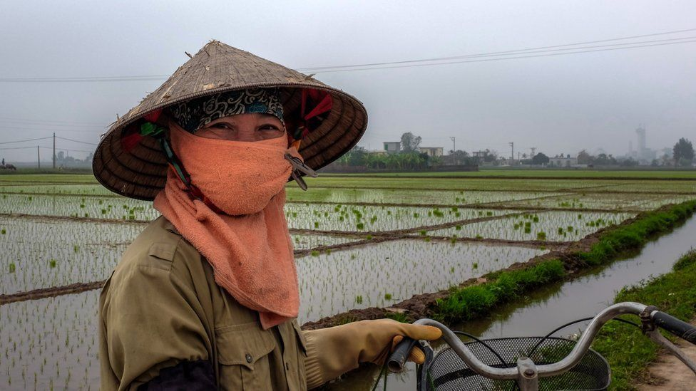 Rice farmer in north Vietnam