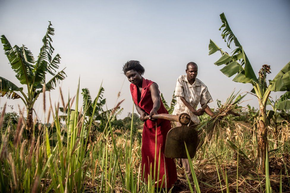 Julius and his wife work the fields on their farm.