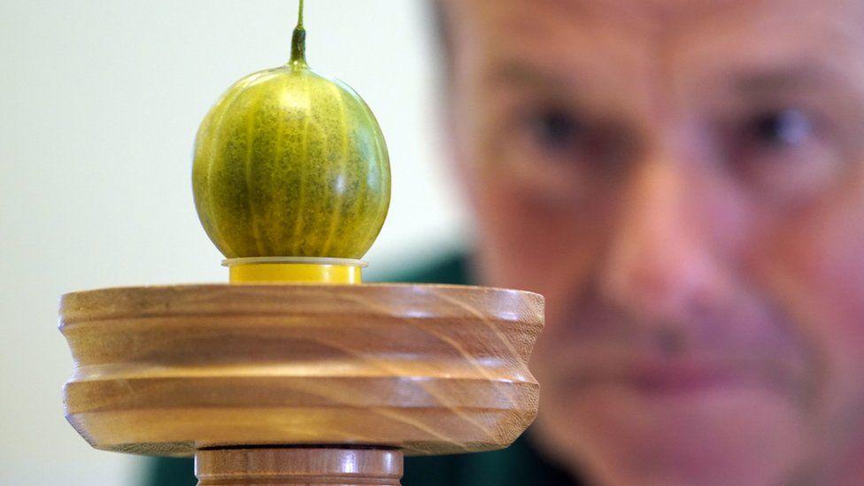 Graeme Watson looks at his prize-winning gooseberry