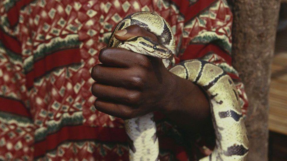 Morsures de serpents, un fléau sous-estimé