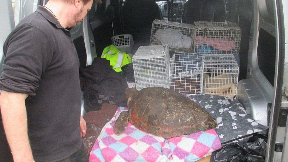 The turtle in the back of a van