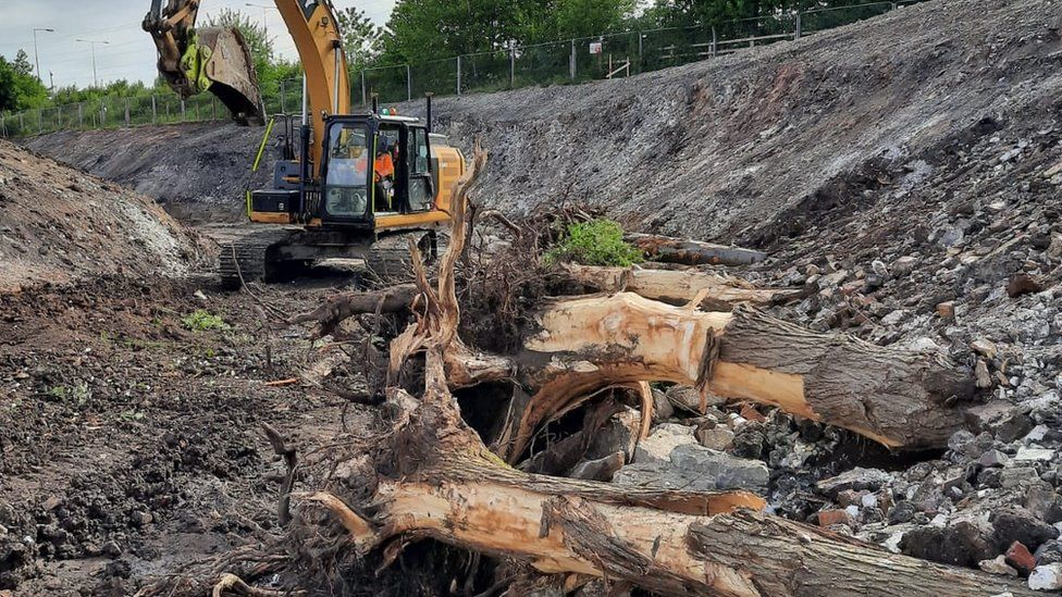 Trees removed to make way for the new channel