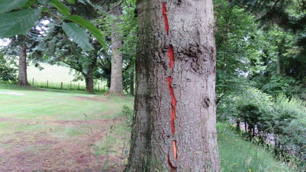 Lightning marks on a tree